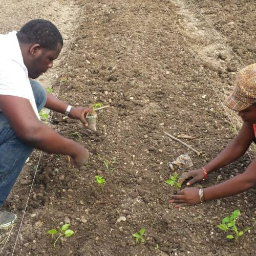 photo of interns planting vegetables in the large garden
