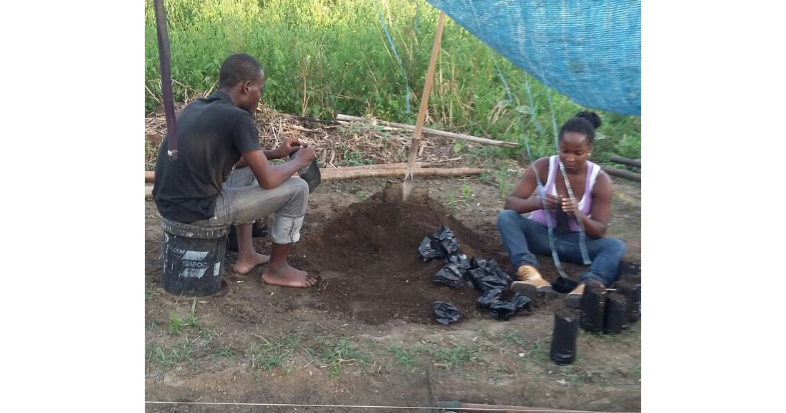 filling bags with planting soil