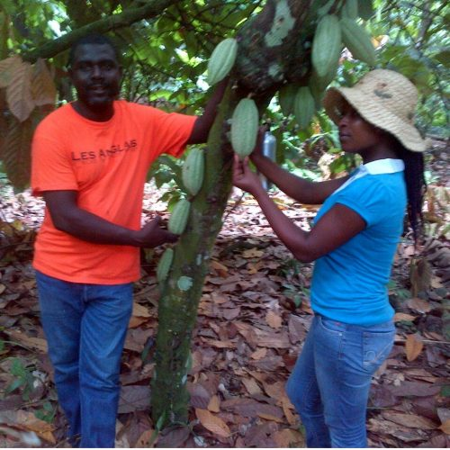 Photo of Etienne, an agronomy agent, and cacao plant with ripe pods