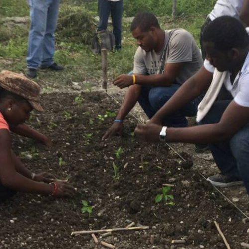 photo of interns planting small vegetable plants
