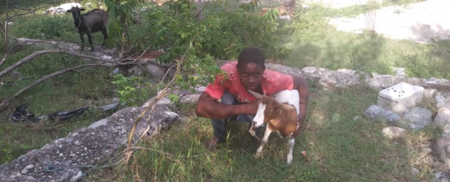 Young man and two goats