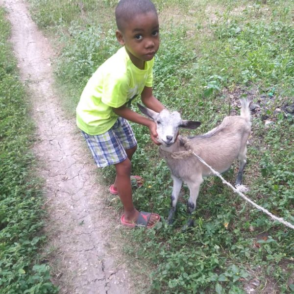 Young boy with goat