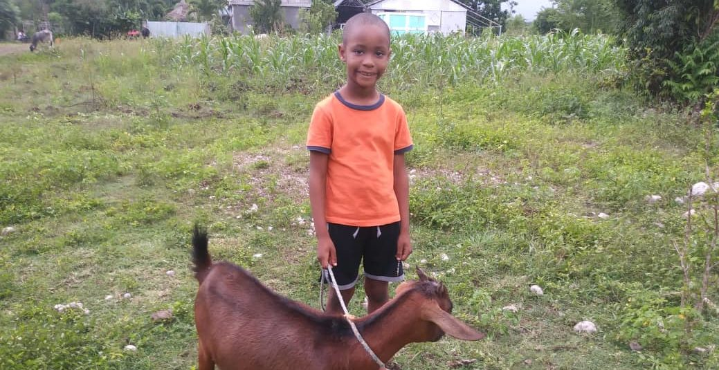 Boy with his brown goat