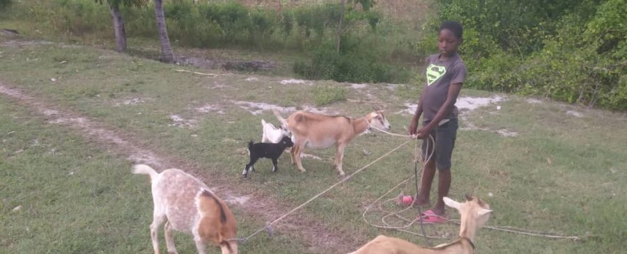 Boy with his 3 nanny goats and 2 kids