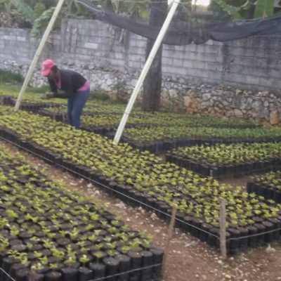caring for young nursery plants