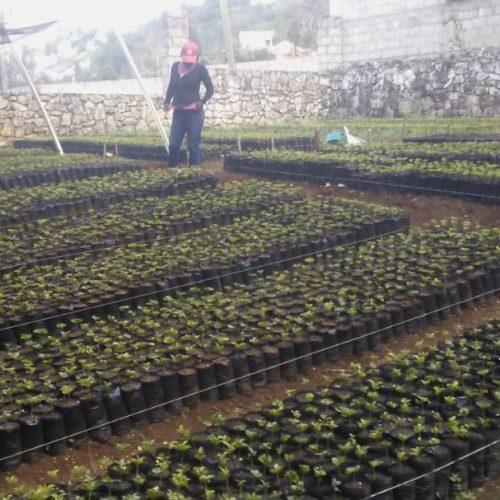 An intern checks on nursery plants