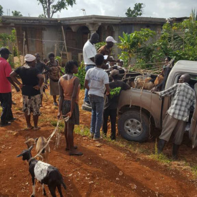 Interns unload goats from pickup truck